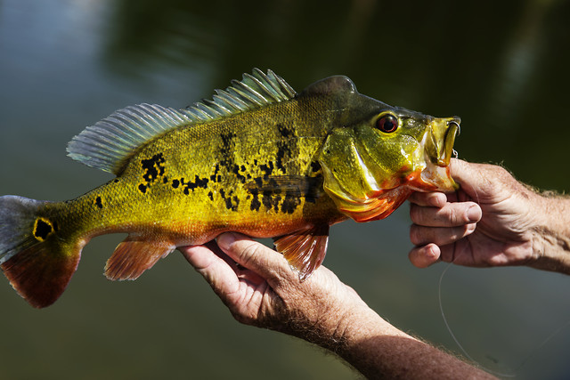 fish-nature-wildlife-freshwater-no-person picture material