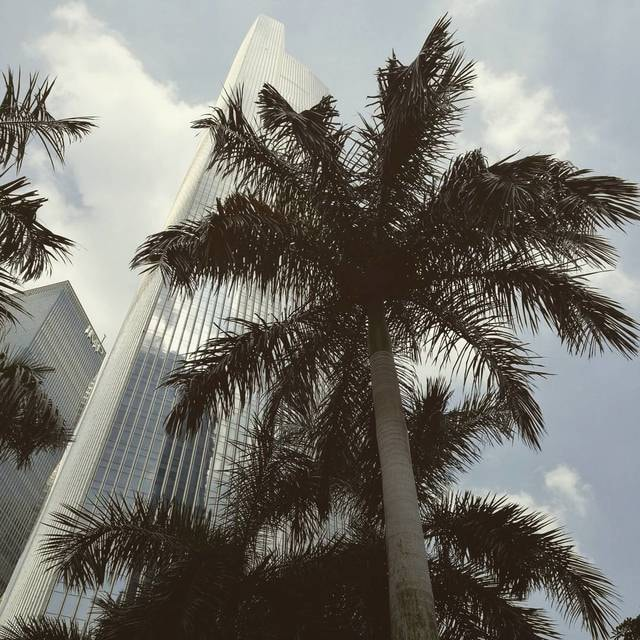 tree-sky-palm-tropical-beach picture material