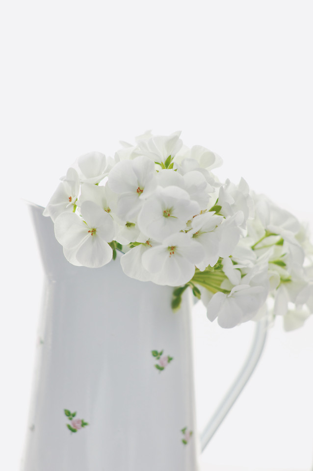 no-person-nature-flower-white-leaf picture material