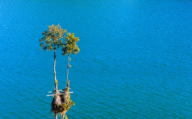 tree-nobody-lake-natural-blue picture material