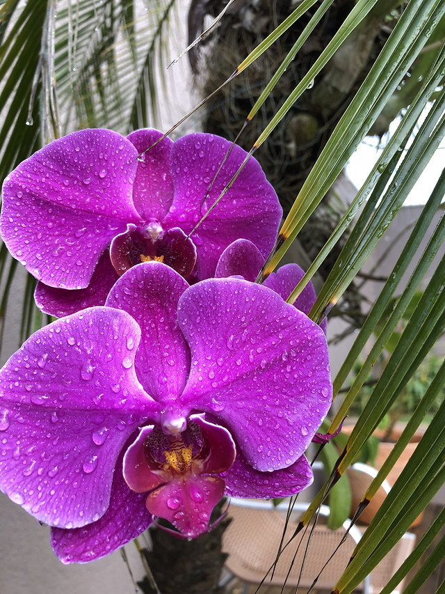 tropical-flower-exotic-flora-nature picture material