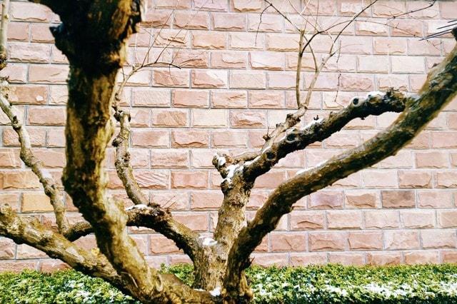 tree-branch-plant-woody-plant-trunk 图片素材