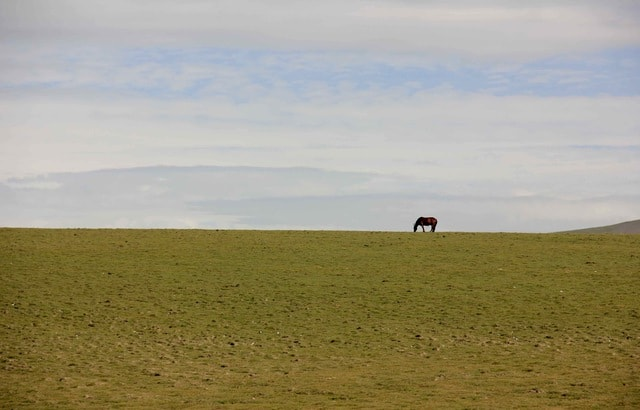 grassland-sky-prairie-pasture-field picture material