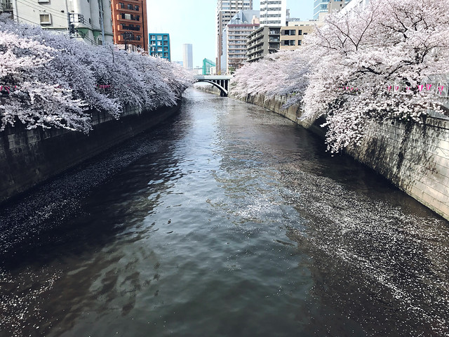 water-winter-river-cold-snow picture material