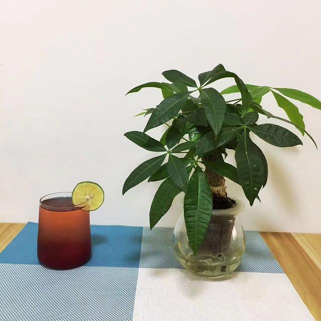 leaf-pot-houseplant-flora-no-person picture material