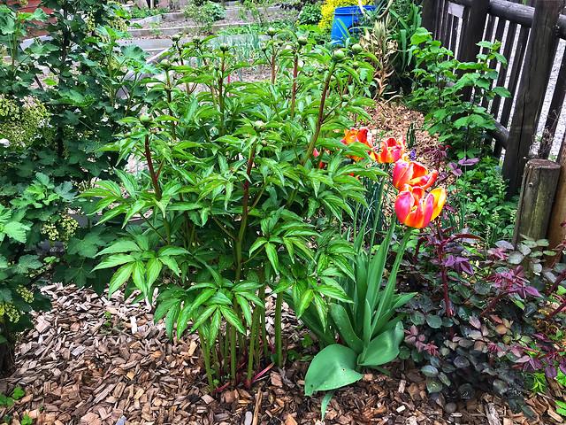 garden-flower-leaf-no-person-plant 图片素材