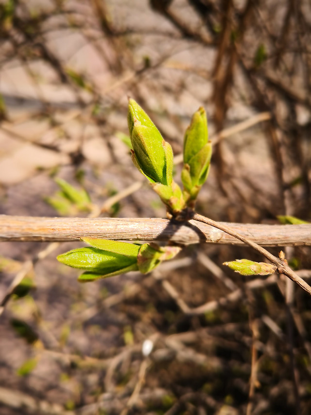 leaf-nature-flora-environment-growth picture material