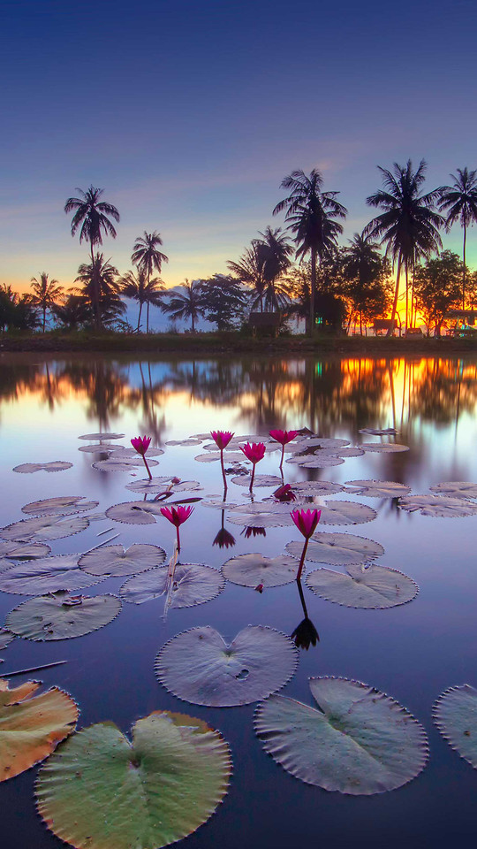 palm-tropical-beach-exotic-reflection picture material
