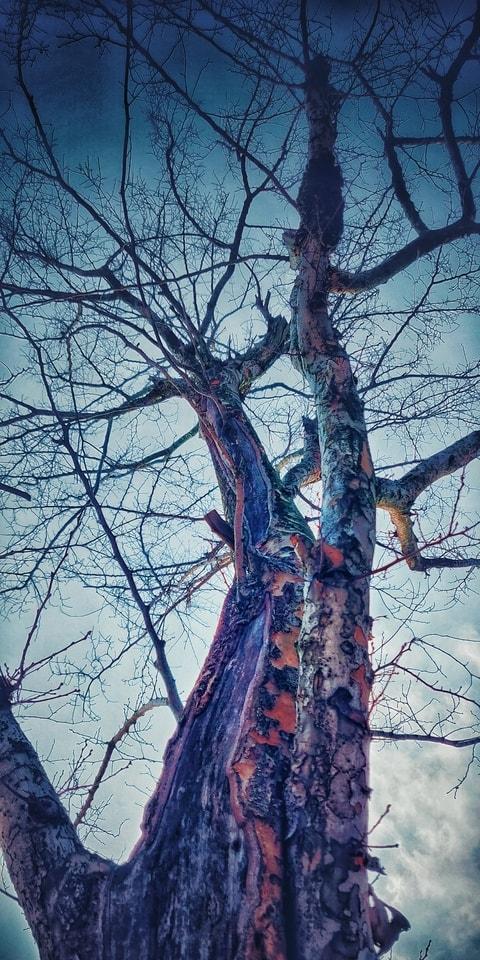 tree-branch-trunk-woody-plant-sky 图片素材