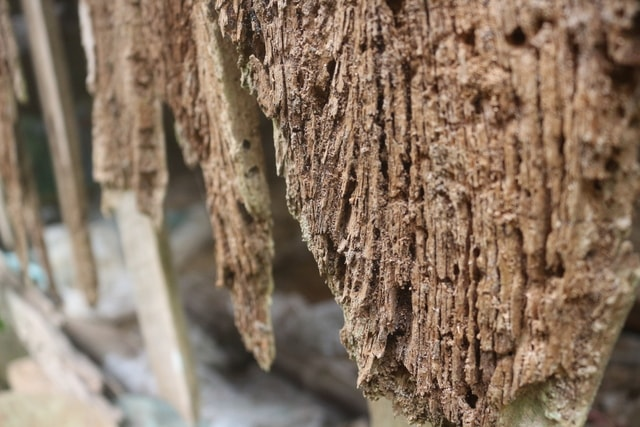 tree-trunk-wood-branch-formation picture material