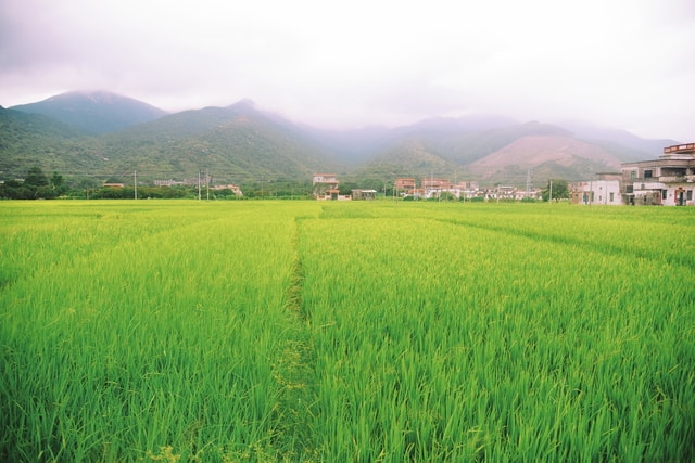 agriculture-field-grass-crop-farm picture material