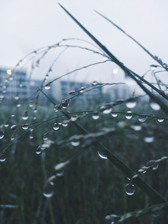 grass-drop-water-droplets-evening-raindrops picture material