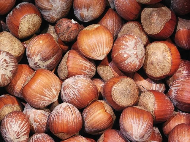 texture-of-hazelnuts picture material