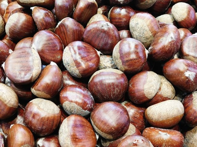 chestnut-texture picture material