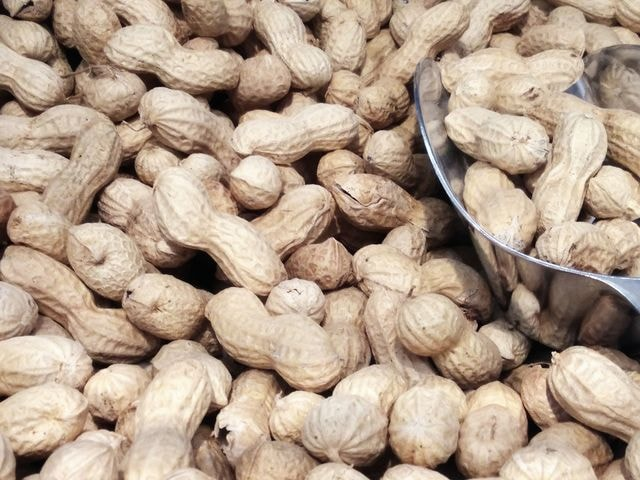 peanuts 图片素材