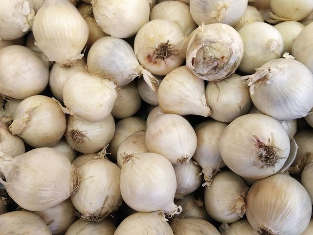 garlic picture material