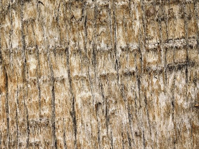 tree-trunk-texture picture material