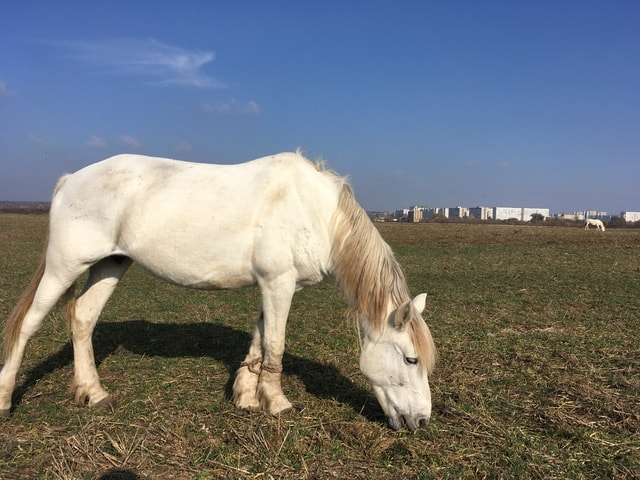 horse-pasture-mare-mane-grassland picture material