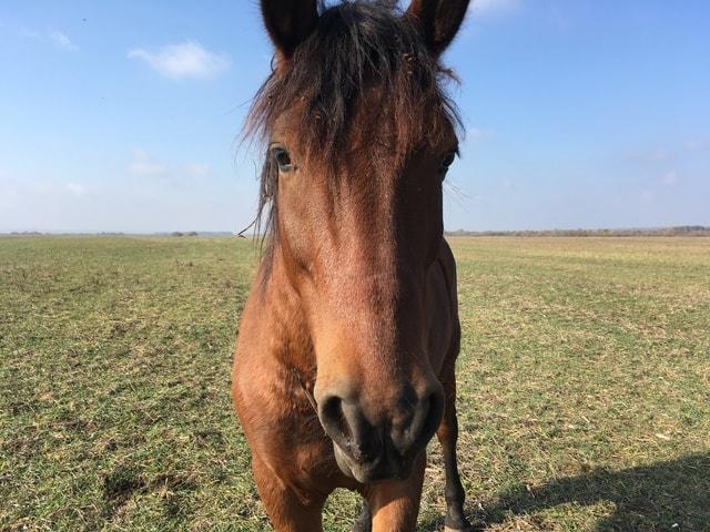 horse-mane-pasture-mare-grassland picture material