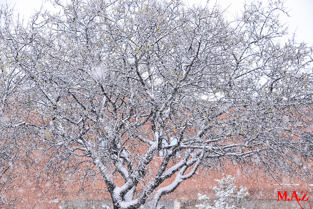 tree-branch-woody-plant-plant-frost 图片素材