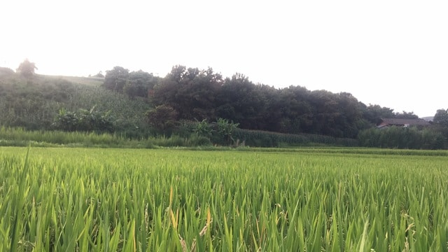 agriculture-crop-field-pasture-farm picture material