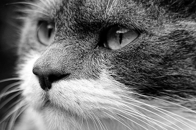 le-regard-d'un-chat 图片素材