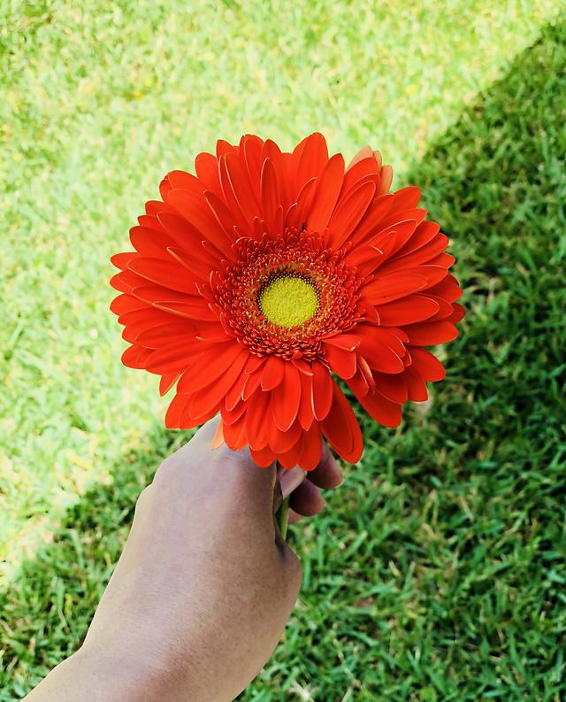 flower-summer-flora-nature-garden picture material