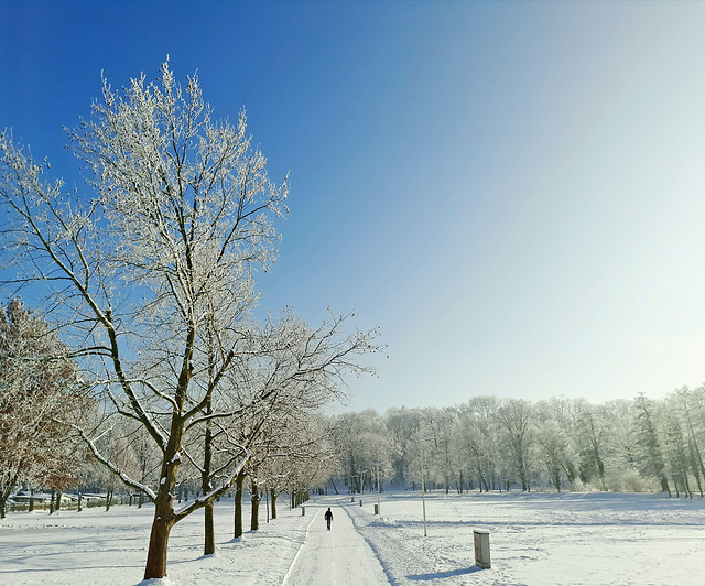 snow-winter-frost-cold-ice picture material