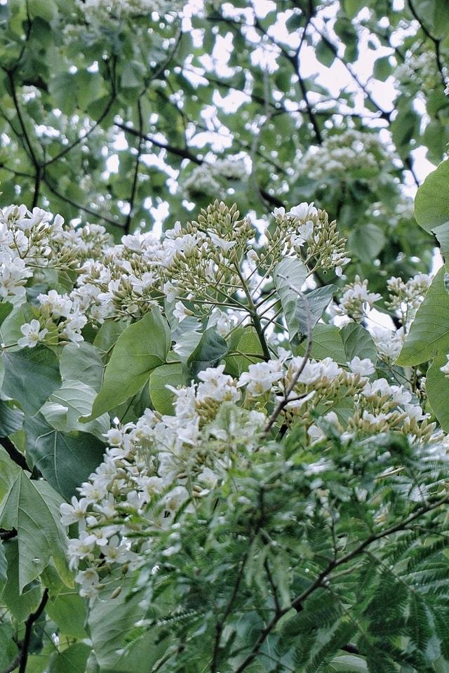 flower-plant-tree-flowering-plant-woody-plant 图片素材