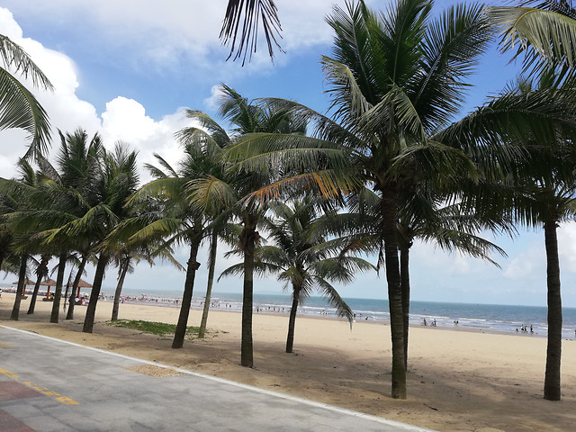 beach-sand-tropical-travel-palm picture material
