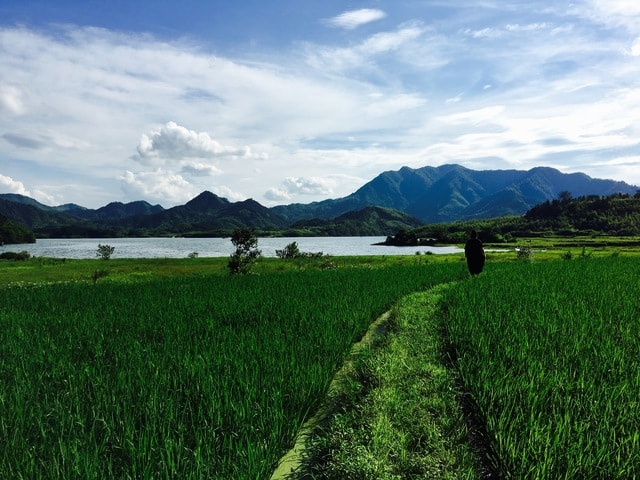 field-agriculture-sky-grass-pasture picture material