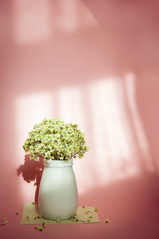 flower-still-life-afternoon-beautiful-sunlight picture material