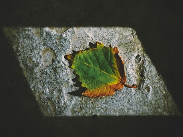 fallen-leaves picture material