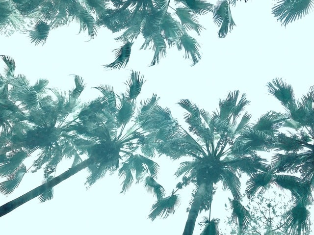 tree-palm-coconut-tropical-beach picture material