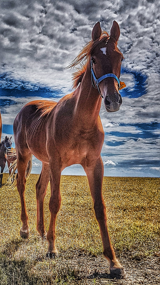 horse-mare-mane-stallion-grass picture material