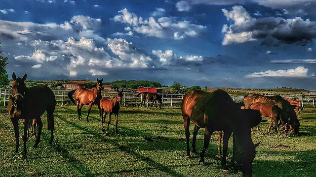 pasture-grassland-herd-farm-horse picture material