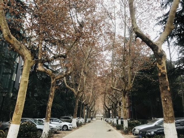 tree-woody-plant-sky-winter-branch 图片素材