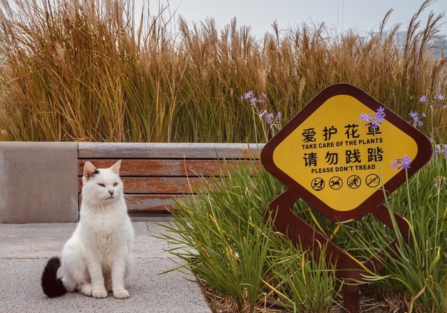 cat-grass-cat-guard-no-person-outdoors picture material