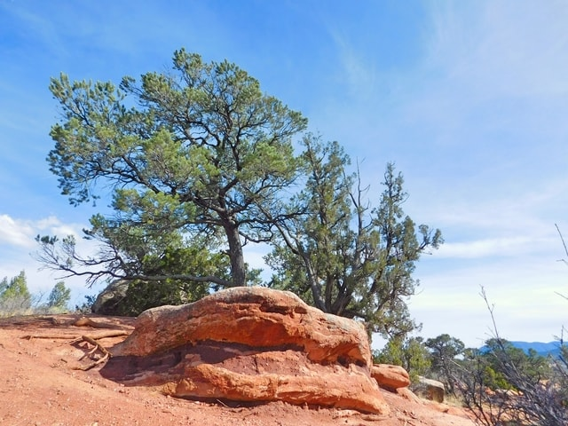 tree-and-rock-formation-t-garden-of-the-gods picture material