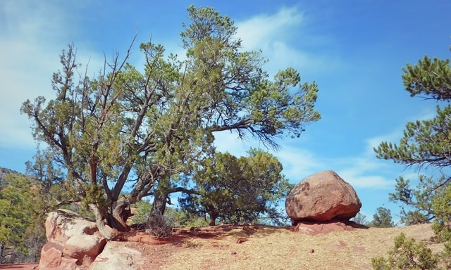 trees-in-a-desert-landscape picture material