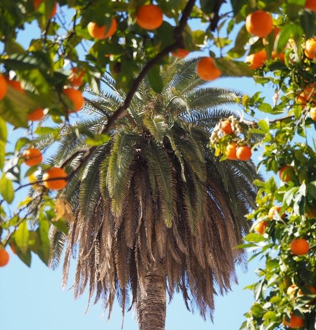 tree-plant-woody-plant-flower-palm-tree 图片素材