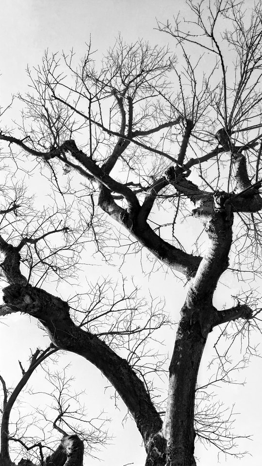 tree-branch-woody-plant-twig-plant 图片素材