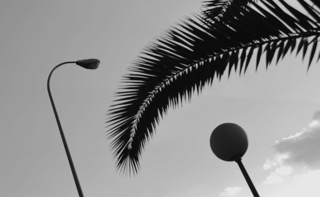 sky-tree-lamps-palm-three picture material