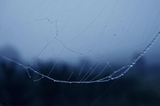 sky-spider-web-spider-spiderweb-arachnid picture material
