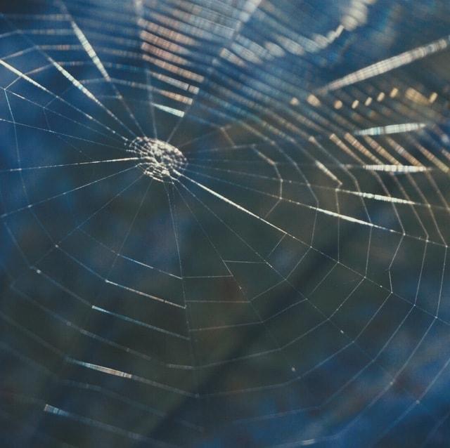 spider-spiderweb-web-together-web-no-person picture material
