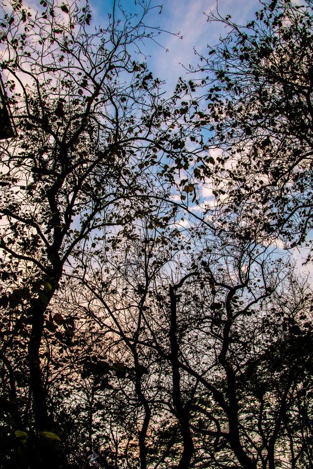 tree-branch-sky-woody-plant-spring 图片素材