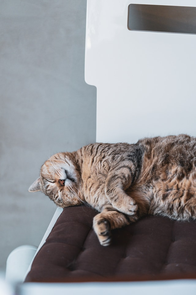 lazy-cat picture material