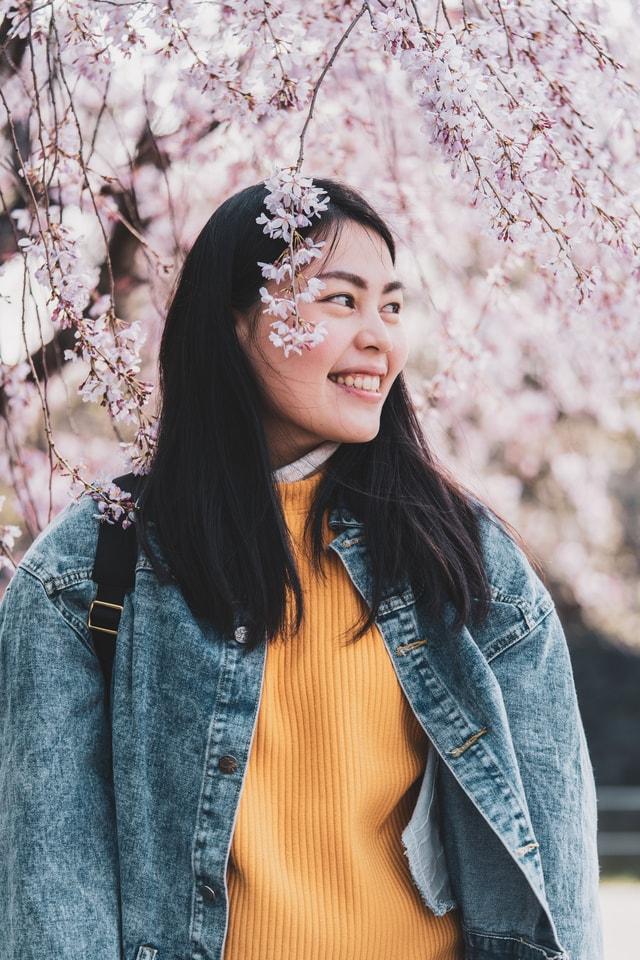 sakura-blossom picture material