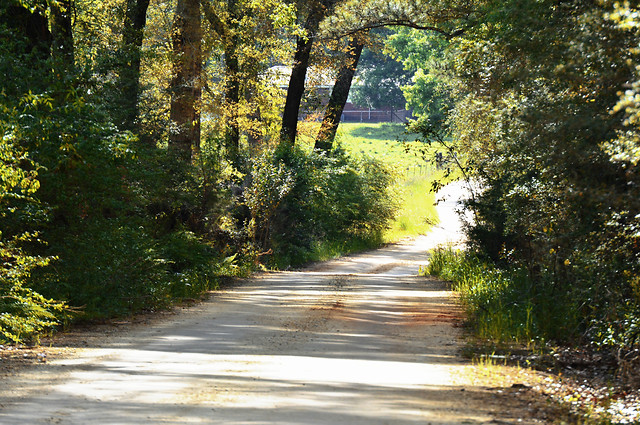 road-nature-leaf-tree-lane picture material