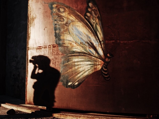art-painting-butterfly-light-and-shadow-animal picture material